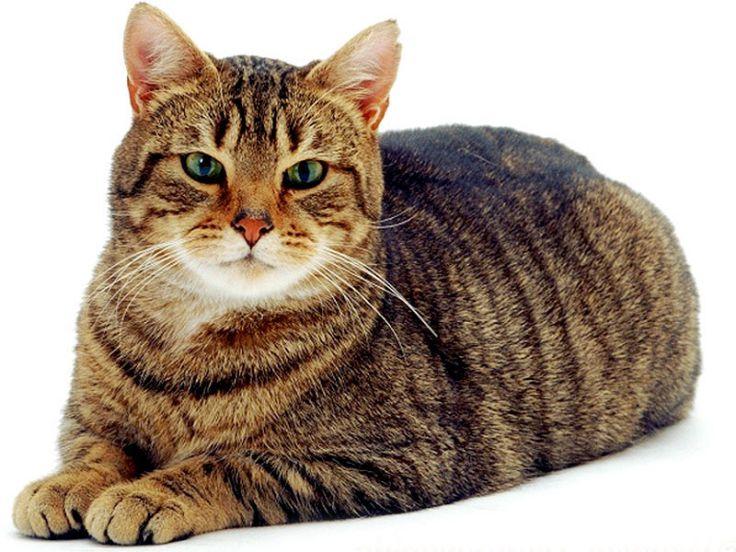 Aaa Cercasi Amante Dei Gatti Che Passi Il Tempo Con 55 Felini