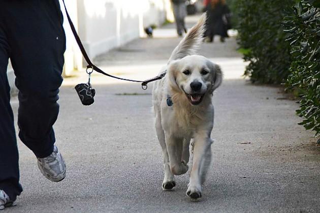Venezia portava a spasso il cane durante l 39 orario di - Portare il cane al canile ...