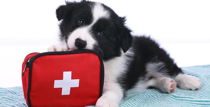 Jesolo (VE). Bau bau beach: pronto soccorso veterinario. | PetNews24