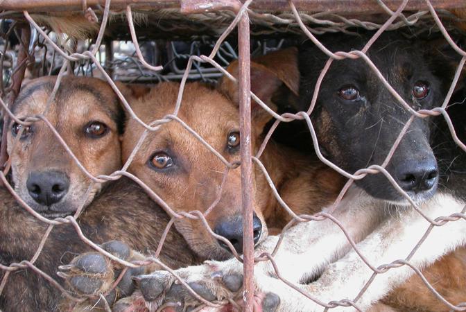 Risultati immagini per STOP AGLI ANIMALI ALLEVATI IN GABBIA: PARTE LA RACCOLTA FIRME