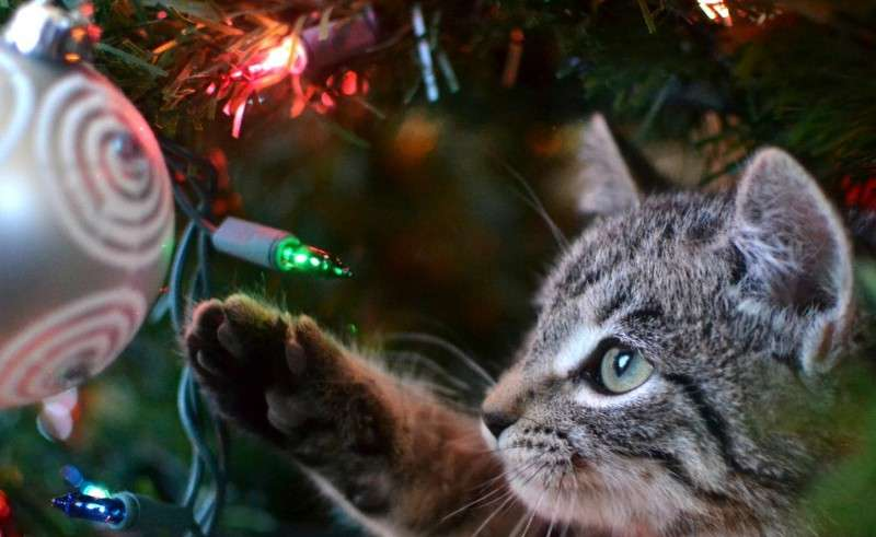 Animali Natale Immagini.Natale Con Gli Animali Domestici 24 Passi Felici Petnews24